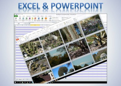Excel and PowerPoint projects