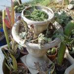 Repurposed fountain planter