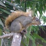 Predatory squirrel messing with my garden